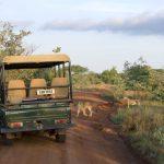 Viajar para a África: saiba como explorar este continente