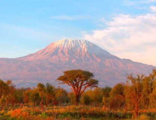 Por que comprar um pacote de viagem da ACT para a África?