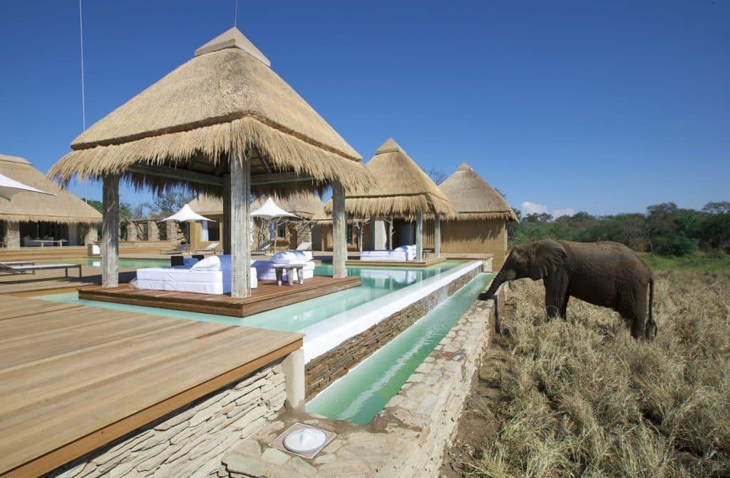 Elefante bebendo água no lodge Kapama