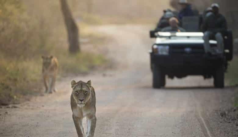 safári reserva privada África do Sul